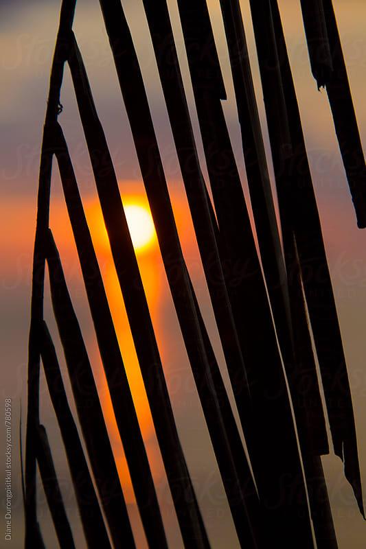 Palm Tree Sunset by Diane Durongpisitkul for Stocksy United