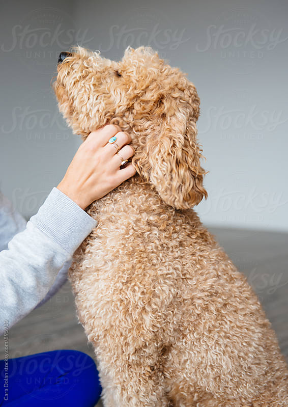 Woman gives happy goldendoodle dog a good scratch by Cara Slifka for Stocksy United