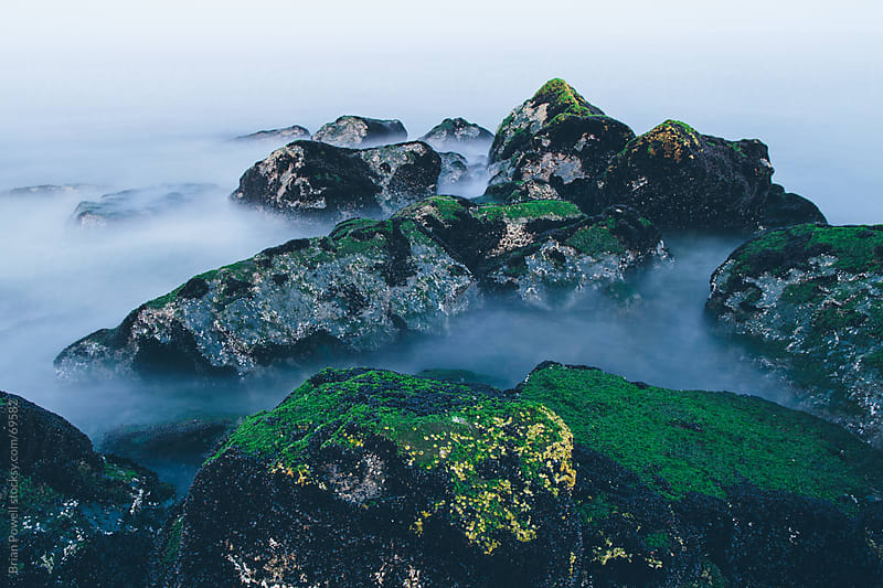 sea moss and rocks on ocean's edge by Brian Powell for Stocksy United