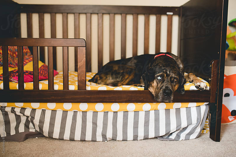 It's a Dog's life by Courtney Rust for Stocksy United