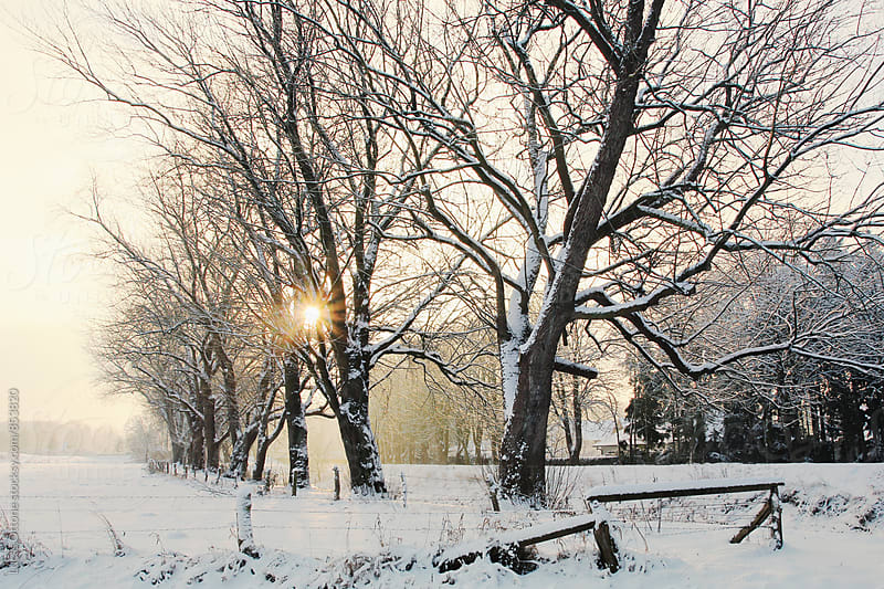 Line of trees in a landscape full of snow by Lucas Ottone for Stocksy United