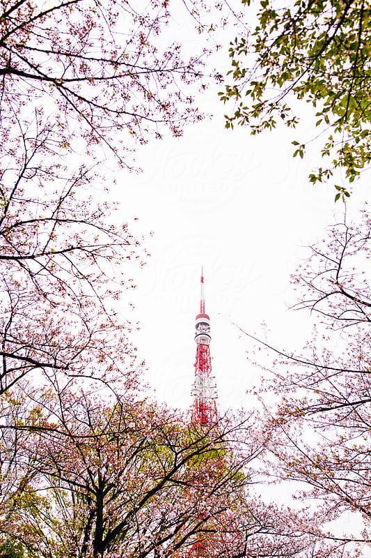 Tokyo tower and cherry blossom on springtime.  by BONNINSTUDIO for Stocksy United