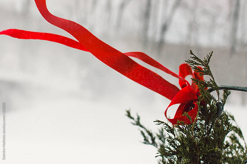 red ribbon on Christmas wreath blowing in snow by Deirdre Malfatto for Stocksy United