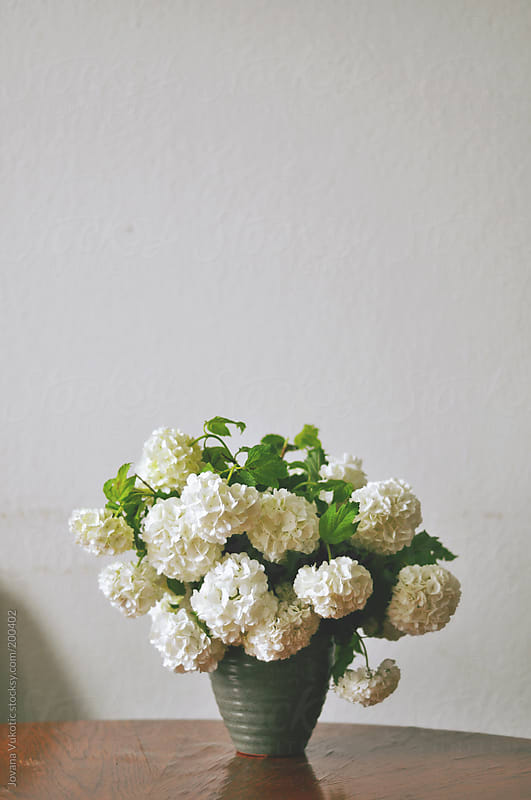 white flowers by Jovana Vukotic for Stocksy United