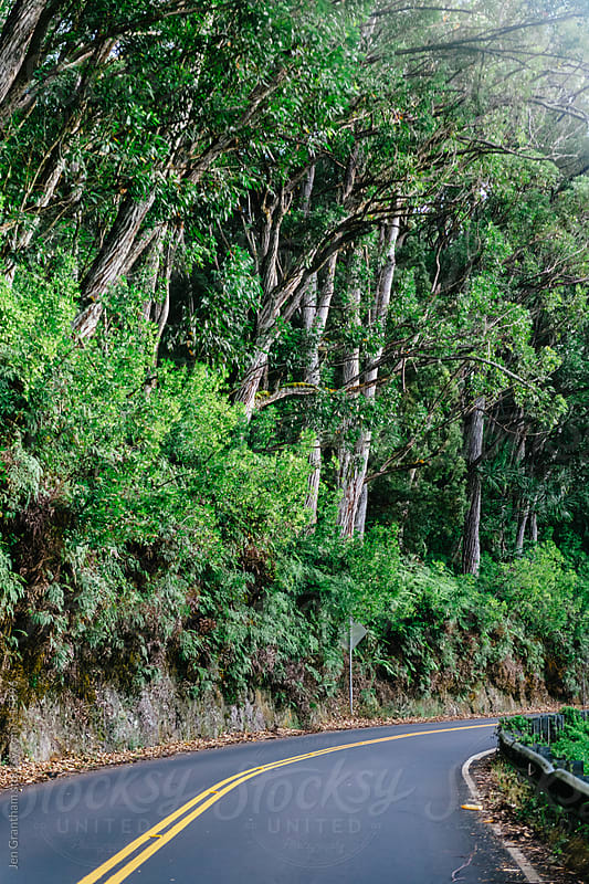 Driving the Hana Highway by Jen Grantham for Stocksy United