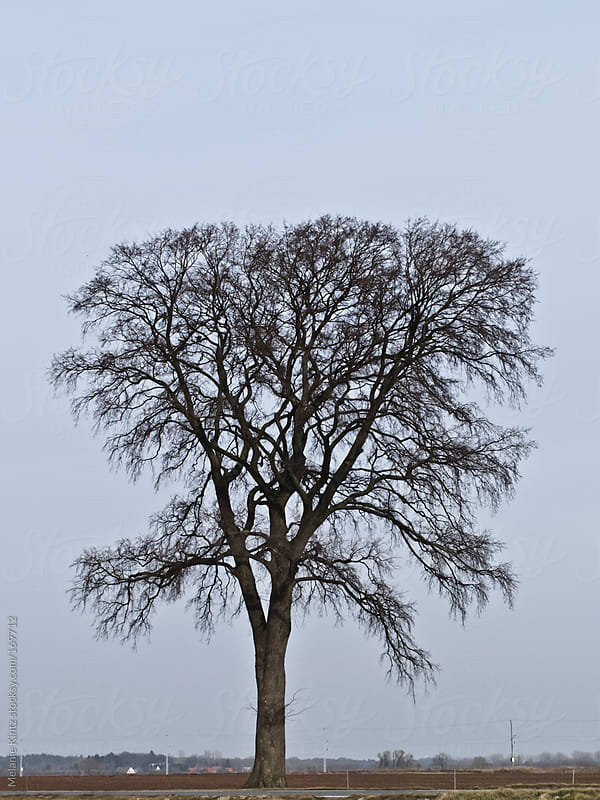 Bare tree standing on a field by Melanie Kintz for Stocksy United