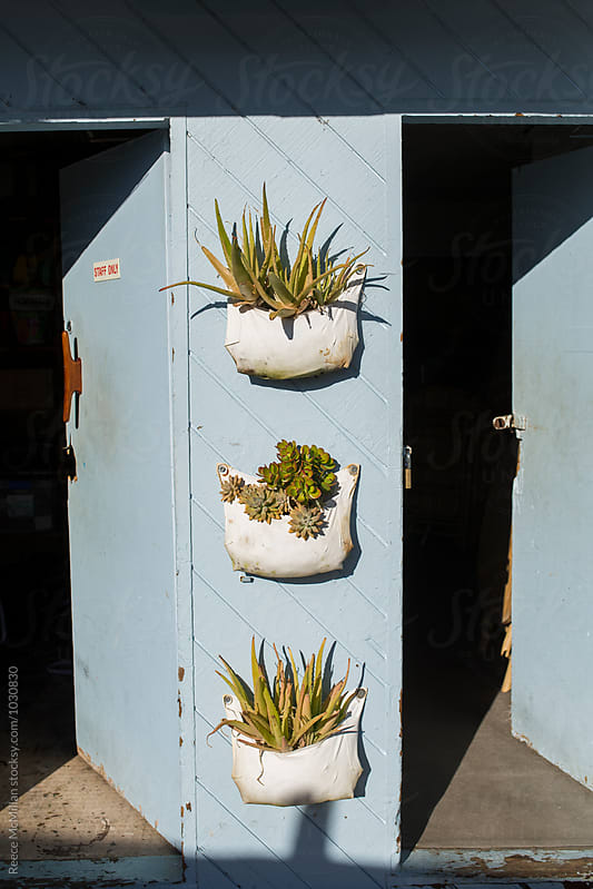 Succulents mounted on an outside wall by Reece McMillan for Stocksy United