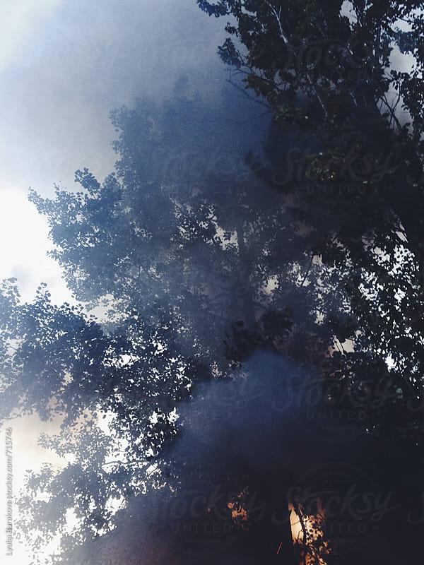 Smoke in the woods by Lyuba Burakova for Stocksy United