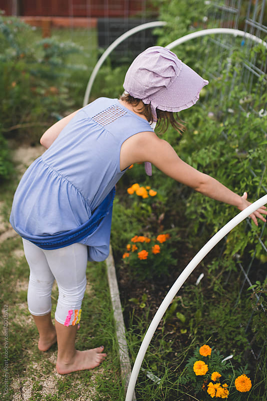 Young Tween girl harvesting tomatoes in garden by Courtney Rust for Stocksy United