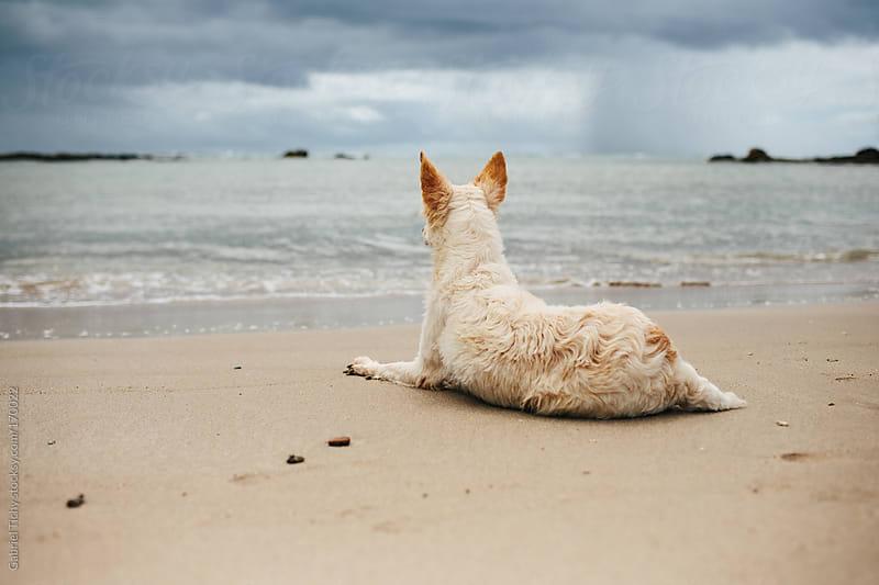Dog sitting on a sandy beach by Gabriel Tichy for Stocksy United