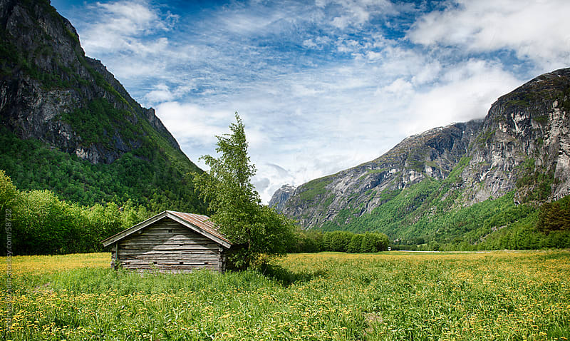 a green summer field in Fjordland, Norway by Andreas Gradin for Stocksy United