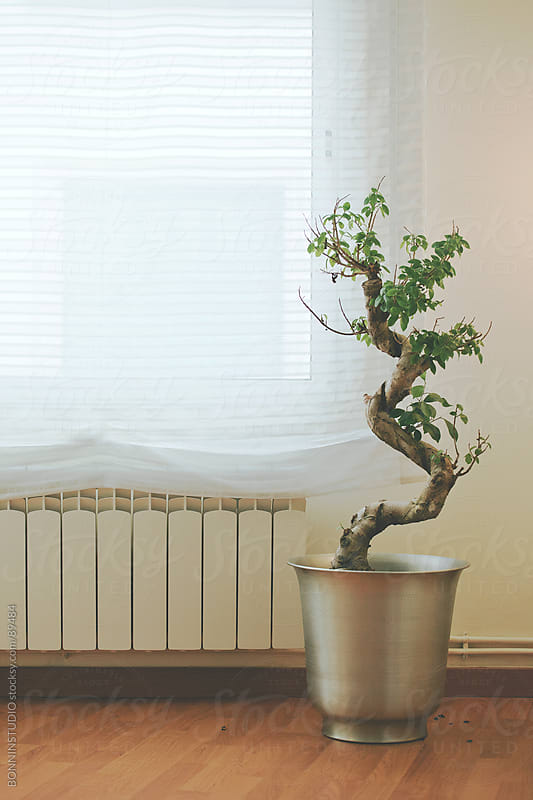 Warm home. Radiator and plant at home. by BONNINSTUDIO for Stocksy United