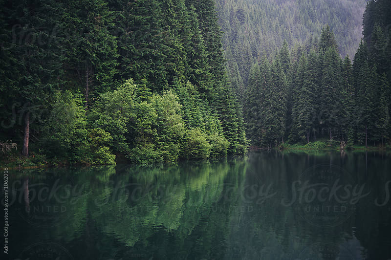 Fir forest and a lake by Adrian Cotiga for Stocksy United