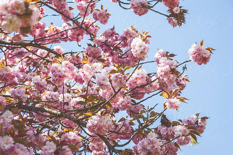 Hello Spring by Alie Lengyelova for Stocksy United