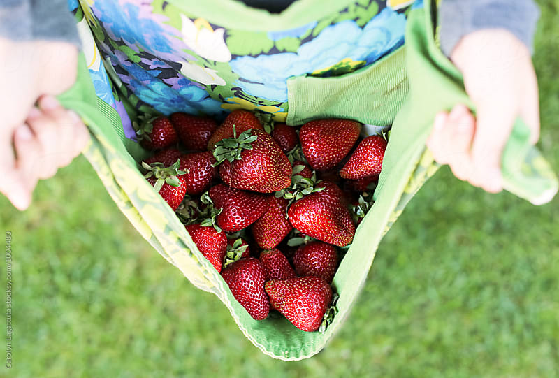 Strawberry harvest collected in an apron by Carolyn Lagattuta for Stocksy United