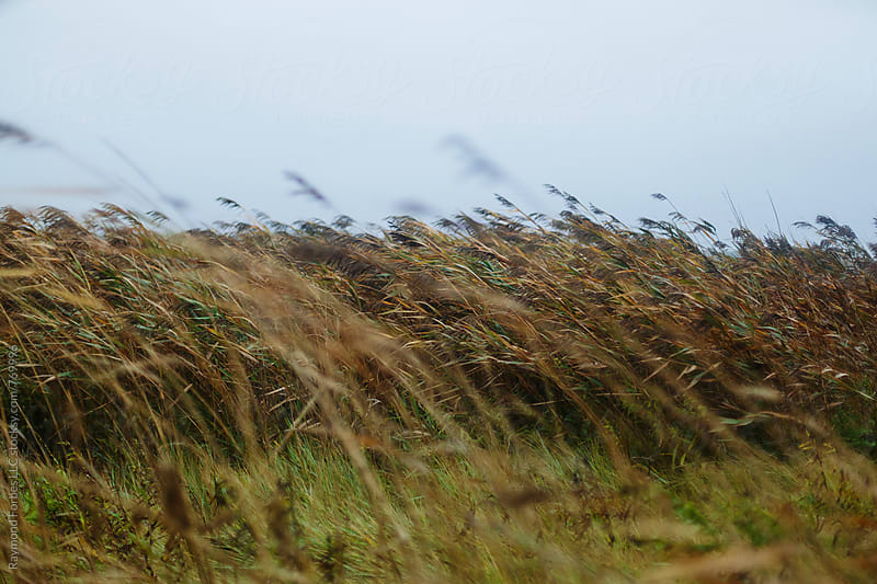 Marsh Reeds in Autumn Storm by Raymond Forbes LLC for Stocksy United