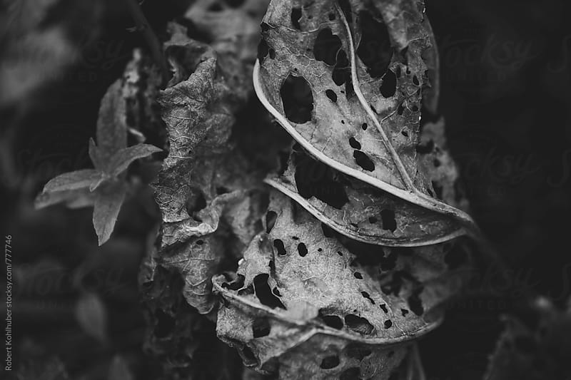 Fading leafes by Robert Kohlhuber for Stocksy United