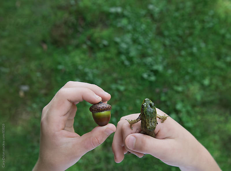 Child's hands hold mementos of time spent outside - a small green frog and an acorn by Cara Dolan for Stocksy United