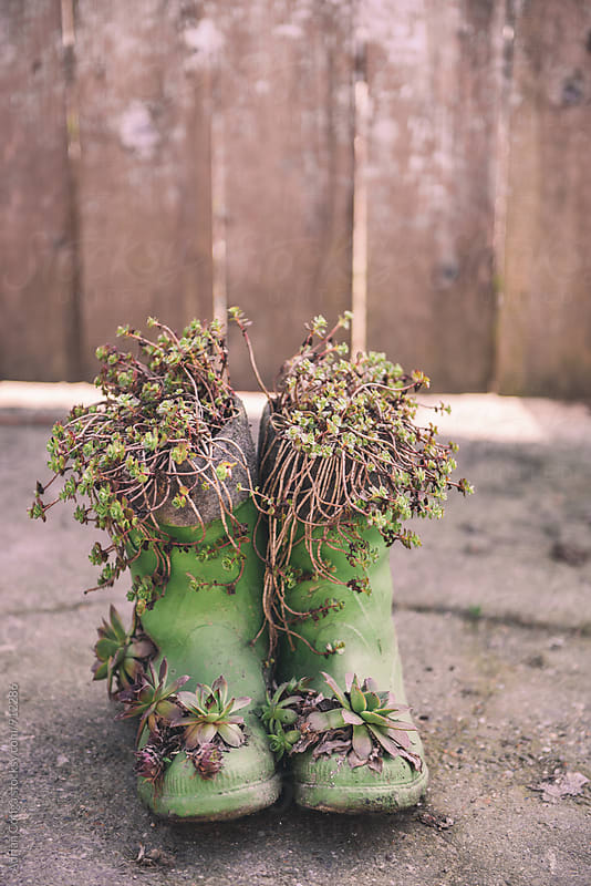 Succulent plants growing in boots by Adrian Cotiga for Stocksy United