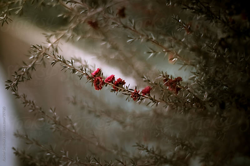 Branch with small red blossoms in earth tones by Rachel Bellinsky for Stocksy United