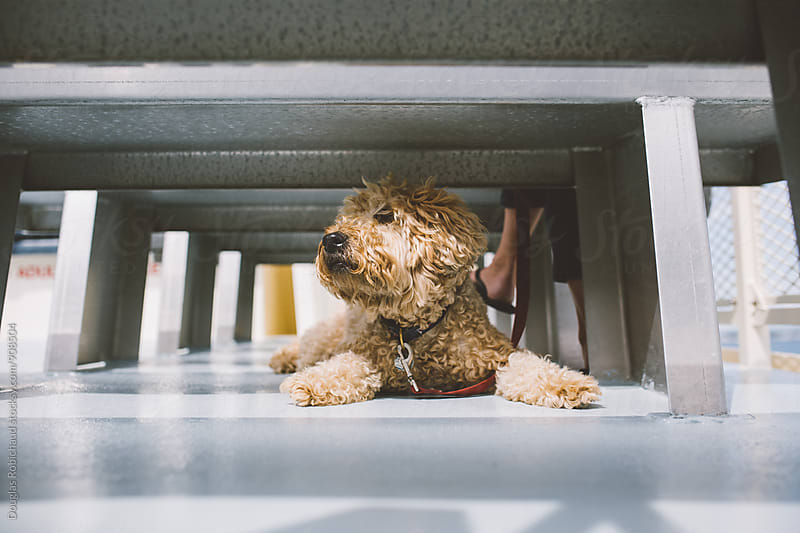 Cute dog lying down on boat by Douglas Robichaud for Stocksy United