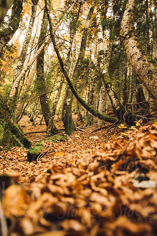 fallen leaves in autumn park by Javier Pardina for Stocksy United