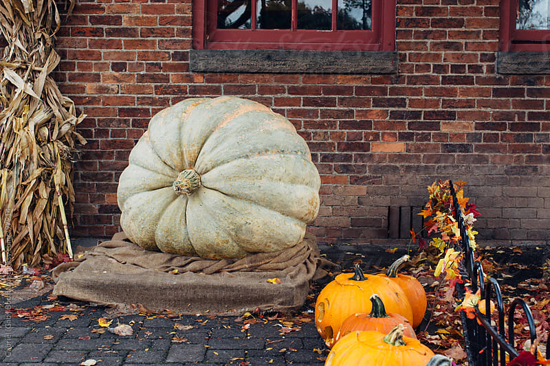 Huge pumpkin next to a house by Gabriel (Gabi) Bucataru for Stocksy United