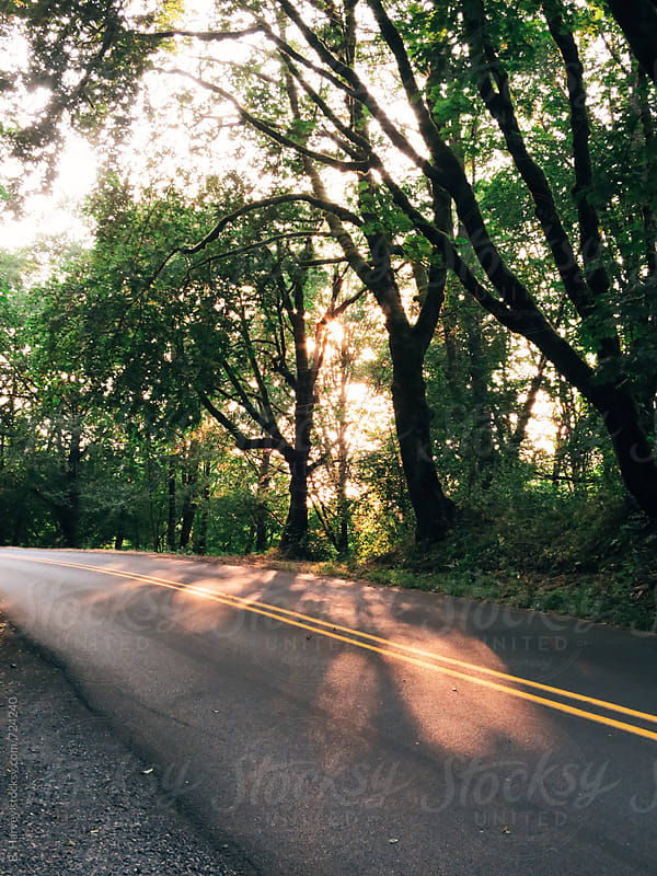 Beautiful Road Surrounded by Trees in Oregon by B. Harvey for Stocksy United