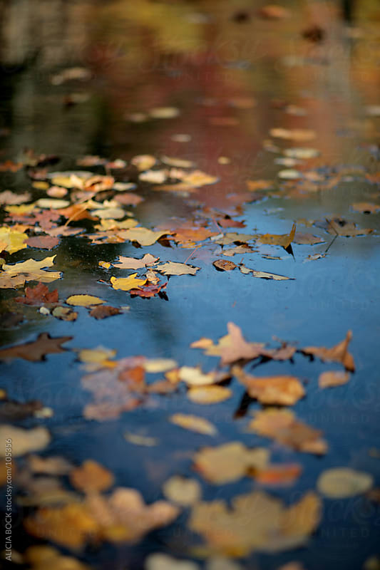 Colorful Autumn Leaves Floating On The Lake by ALICIA BOCK for Stocksy United