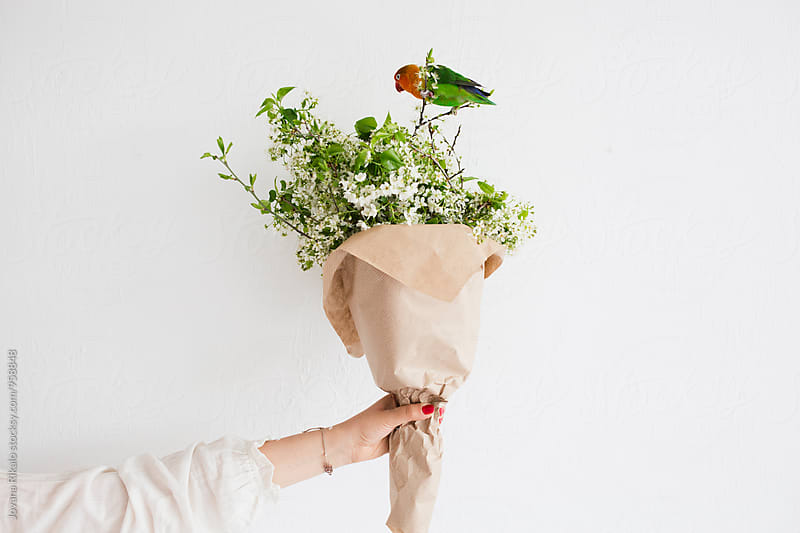 Parrot and cherry blossom by Jovana Rikalo for Stocksy United