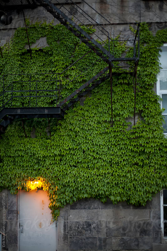 Ivy covered Victorian School by Erik Naumann for Stocksy United