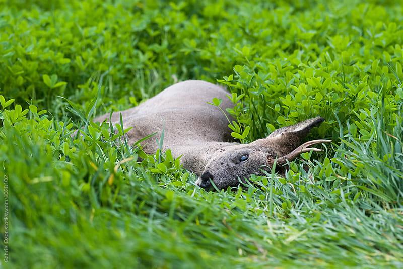 Dead buck by Gabriel Ozon for Stocksy United
