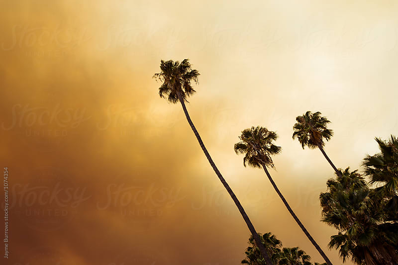 Smoke Over Los Angeles by Jayme Burrows for Stocksy United
