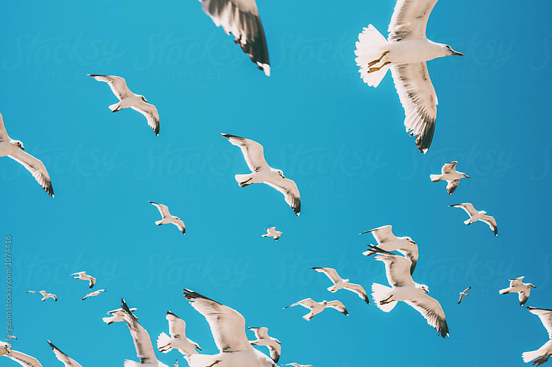 Flock of Seagulls 01 by craig ferguson for Stocksy United