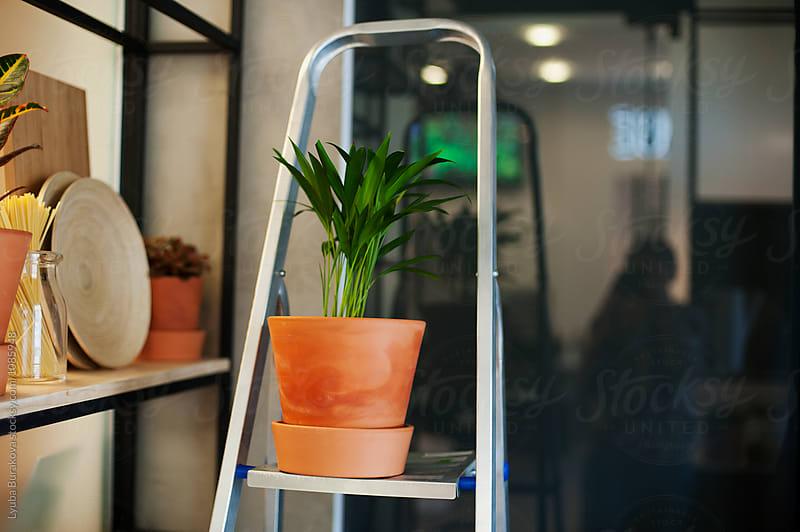 Plant on a ladder by Lyuba Burakova for Stocksy United
