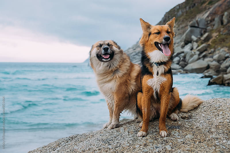 Two happy dogs sitting on a rock at the beach by Micky Wiswedel for Stocksy United