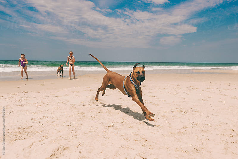 happy dogs running on the beach by Gillian Vann for Stocksy United