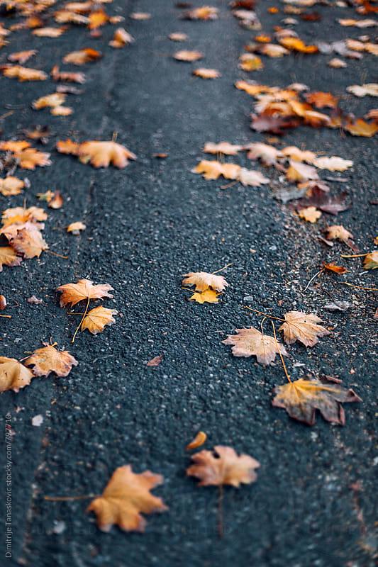 Fallen orange leaves on the path in the park by Dimitrije Tanaskovic for Stocksy United