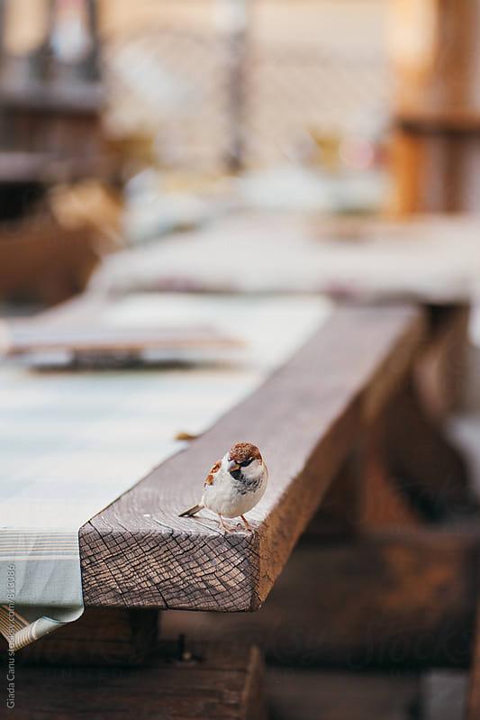 Social sparrow by Giada Canu for Stocksy United