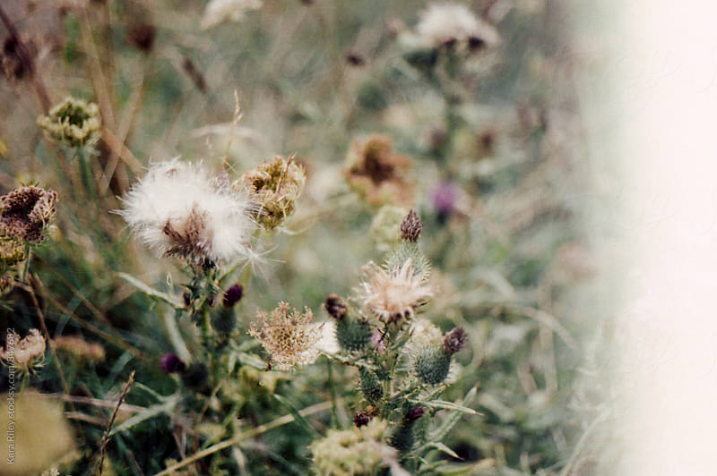 Wild flowers by Kara Riley for Stocksy United