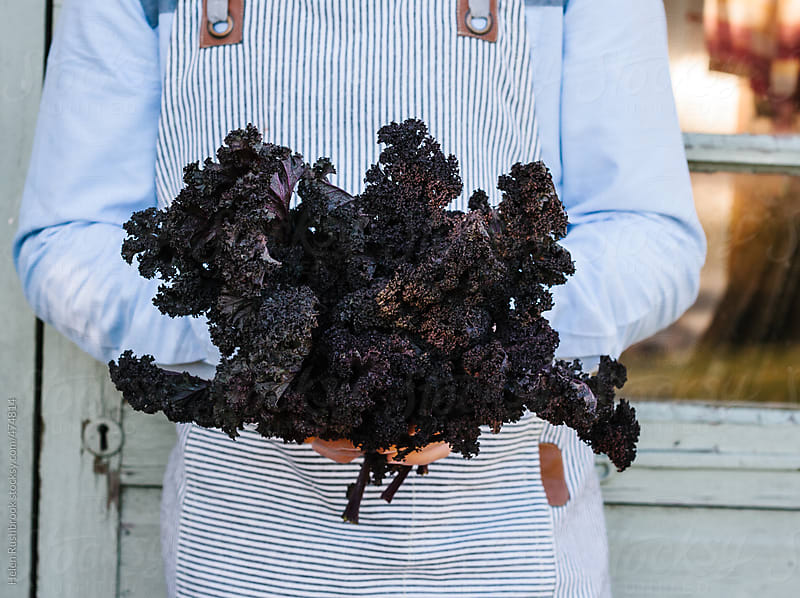 Purple curly kale by Helen Rushbrook for Stocksy United
