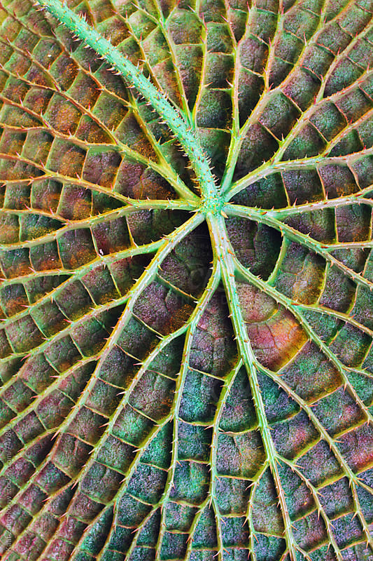 Closeup of a colorful Amazonian lilypad by Kaat Zoetekouw for Stocksy United