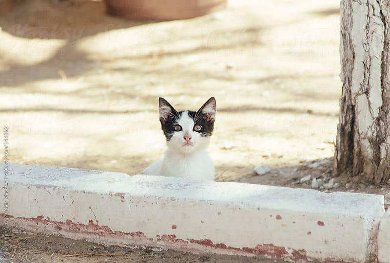 Turkish kitty cat by Maximilian Guy McNair MacEwan for Stocksy United