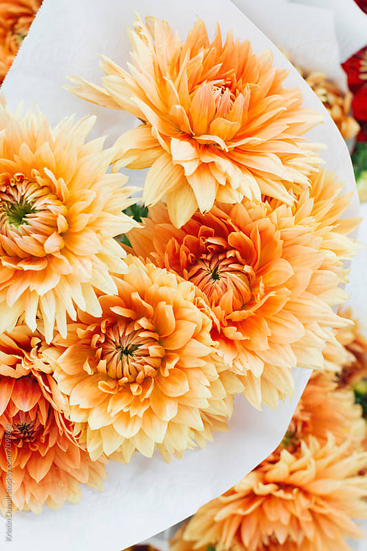 Bouquet of orange colored Dahlia flowers by Kristin Duvall for Stocksy United