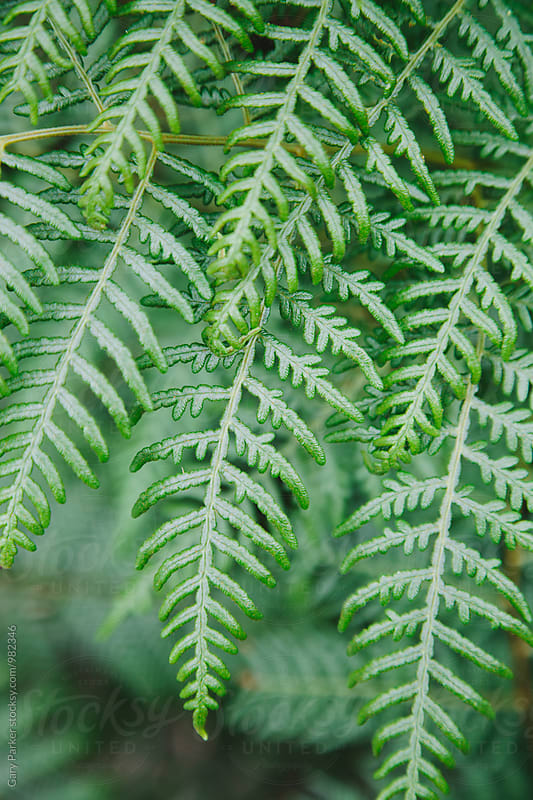 Australian Fern Leaf by Gary Parker for Stocksy United