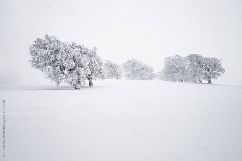 Group of trees in Snowed in Winter Landscape by Andreas Wonisch for Stocksy United
