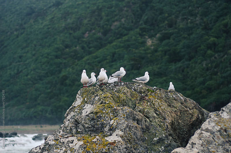 Seagulls sitting on a rock by Dominique Chapman for Stocksy United