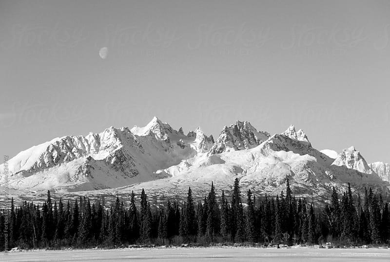 Denali National Park Alaska by Raymond Forbes LLC for Stocksy United