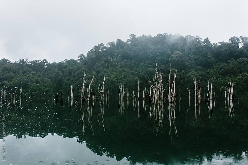 river reflections by ian pratt for Stocksy United