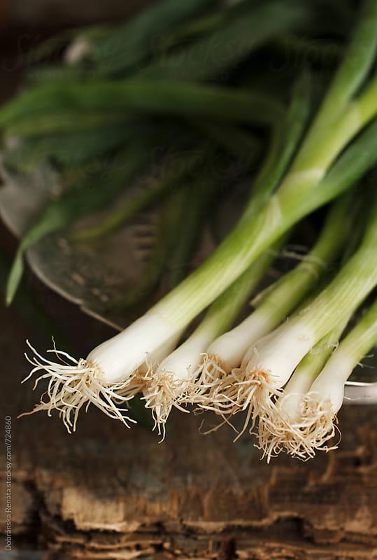 Spring onions by Dobránska Renáta for Stocksy United